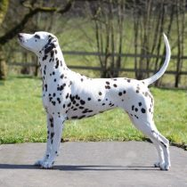 dog-handling